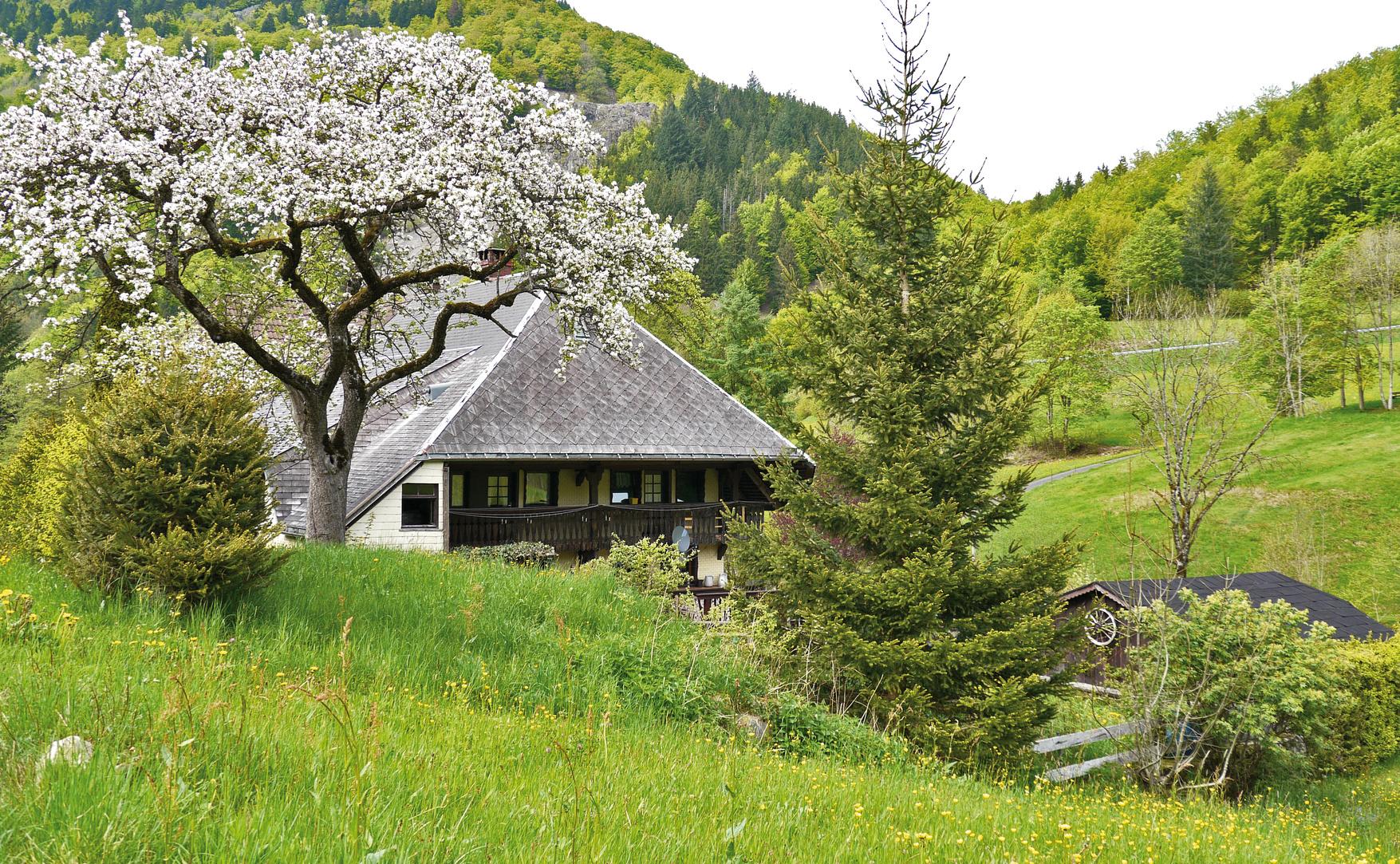 Schwarzwald 2